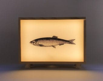 #SARDINA light box