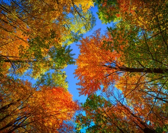 Autumn Leaves Fine Art Metal Print