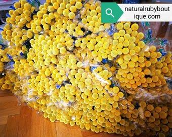 500 X Wholesale Bulk Craspedia, dried flower arrangement, Billy Balls, craspedia bouquet, yellow round flower, flower arrangement