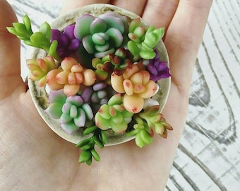mini succulents are handmade.succulents.cacti.Polymer clay plants.Flowers cold porcelain.Decor for the home.Gift.floral arrangement