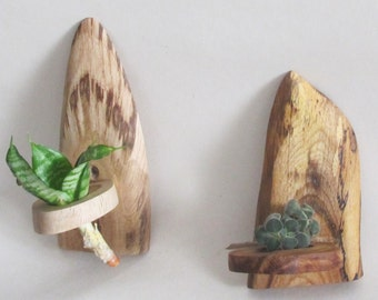 Set of 2 Air Plant Wall Holders, Wood Slice Small Shelf, Wood Slice Wall Decor, Wood Wall Art, Rustic Home Decor
