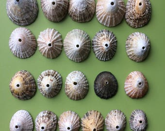 Limpet shells , top drilled limpets , drilled limpet shells , Scottish limpet shells , Scottish shells , drilled shells , craft supplies