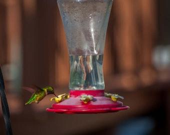 Canvas -  Hummingbird on Feeder