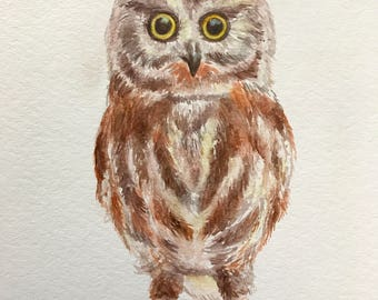 8.5x11 Owl / Owlet Watercolor on Glossy Cover Paper