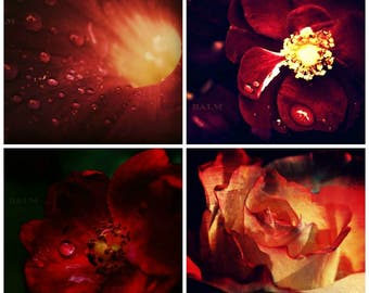 Set of 4 curated dark red romantic & dramatic floral prints, 5 x 7, 8 x 10, 11 x 14, gift ideas, wedding, mother's day, home decor, bridal