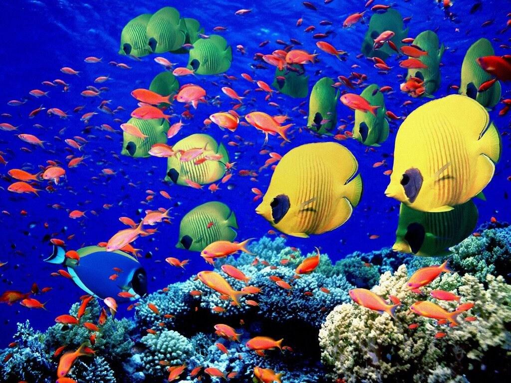 Pescado de agua salada peces de mar peces tropicales mar