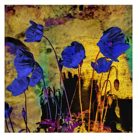 Blue Poppies for Redon, Holiday Sale, Limited Edition Prints, floral art, botanical art, botanical print, poppies, flowers, photo art print