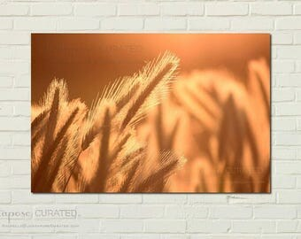 HARVEST GOLD - rural art decor, nature photography, country photography, country art, country landscape, country decor, farm photography,