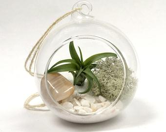 Gemini June Moonstone Air Plant Garden Kit • terrarium tillandsia birthstone crystal birthday personalize gift diy present airplant