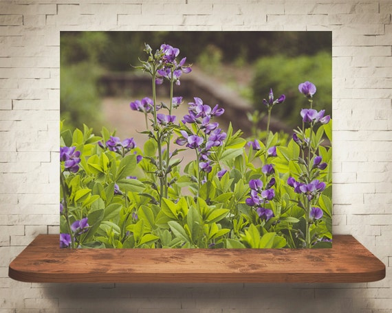 Purple Flowers Photograph - Flower Pictures - Fine Art Print - Wall Decor - Floral Wall Art - Garden Photo - Home Decoration - Wall Hanging