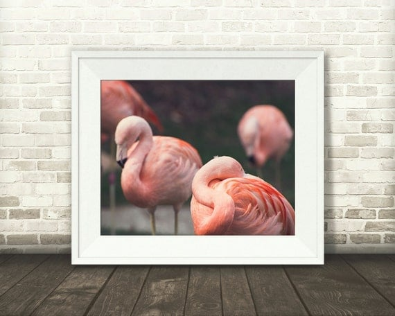 Pink Flamingos Photograph - Fine Art Print - Pink Flamingo Pictures - Home Wall Decor - Nature Photo - Pink Decor - Living Room - Gifts