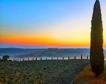 Italy photo, Tuscany Photo, Val D'orcia photo, Fine Art Italy, Wall art Italy,  Tree photos,
