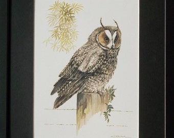 Mounted and framed Owl print, 12''x16'' framed, Long Eared Owl by Joel Kirk