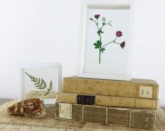 Painted and cut geranium - Handmade and handcoloured Papercut