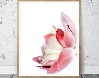 Flower print, Red Succulent Print, Wall Art Print, Cactus Print, succulent wall art, Botanical Print, Cactus Poster, Cactus Photography