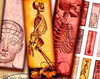 "1x3"" MICROSCOPE SLIDE IMAGES - Skeletons - Printable Digital Collage Sheet - Jewelry Making, Glass Pendants, Scrapbooking, - Journaling"
