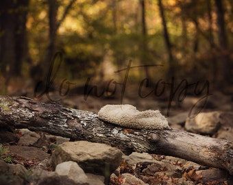 Newborn Digital backdrop, Forest in Arkansas