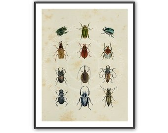 Natural History Insects Beetles Print Entomology Book Plate Home Decor Antique Engraving Old Bugs Creepy Crawlies Wall Art Decoration ak 124