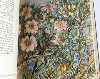 Vintage Wild flowers book