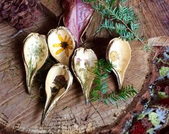 Ornamental Seed Pod Set