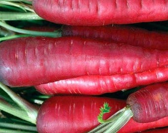 Atomic Red Carrot Organic 100+ Seeds Sweet Flavor #1140