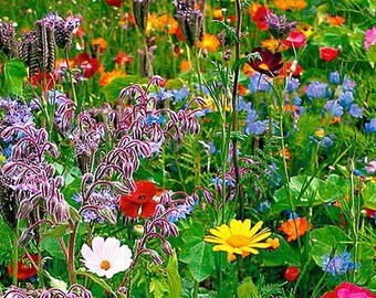 Wildflower Mix 20 Different Flowers 500+ Seeds  ORGANIC Great for Cutting Perennial #1174