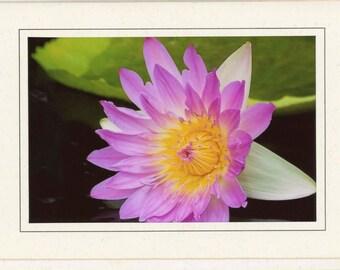 Shirley Bryne Waterlily Blank Note Card