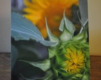 Up-Close Sunflower
