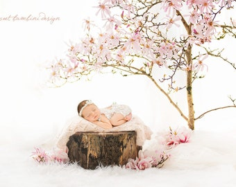 Newborn Digital Background for Girls - under the Magnolia Tree