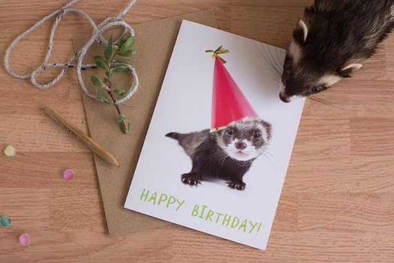 FERRET BIRTHDAY CARD 6 pack cute baby animal card animal in – Ferret Birthday Card