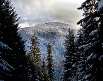 Snow in the Gifford Pinchot National Forest Print or Canvas
