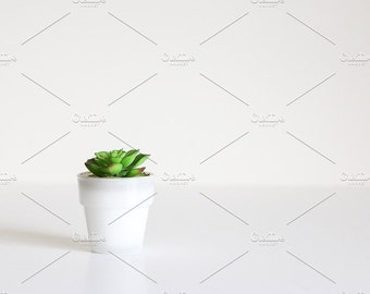 Styled Stock Photo | Small Succulent | Blog stock photo, stock image, stock photography, blog photography