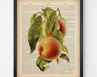 Peach print, Kitchen art print, Botanical Art, Kitchen digital, Fruit print, Upcycled print, Dictionary, Vintage wall art print download