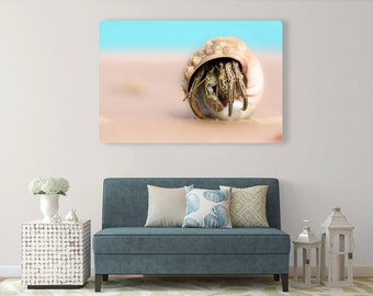 Peekaboo Hermit Crab Metal(aluminum) Print. Ready to hang!