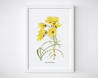 Botanical Yellow watercolor flower, Instant Download, Botanical Flower, Flower decor, Wall art print decor | HELIANTHUS ORGYALIS