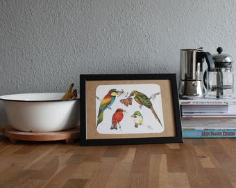 1970's Tropical Birds Book Plate H9,5/W13 inch (framed)