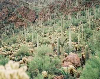 Desert landscape, Saguaro, Desert Print, Southwest decor, Cactus Print, Minimalist Art, Fine Art, Tucson, Arizona