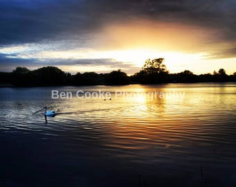 Watermead Park swan lake at sunset PRINT