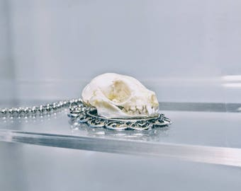 Bat Skull Necklace - Real Animal Skull - Bizarre Jewelry - Taxidermy