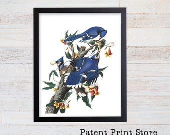 Vintage John James Audubon Blue Jay Art Print. Bird Prints. Audubon Prints. Dining Room Art. Living Room Art. Kitchen Art Decor. Birds. 029