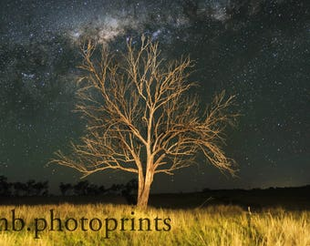 old tree, night sky, stars, milky way, farm, landscape photography, country decor, dead tree, dead tree photography, rural queensland
