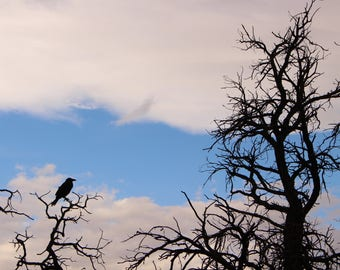 Silhouettes and Canyonlands - Fine Art - Photography - Limited Edition - Prints - Wall Art