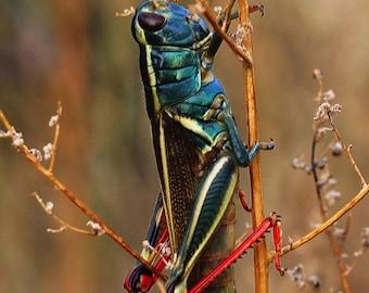 Green Grasshopper in WIlderness