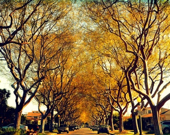 A fall day in Los Angeles