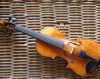 Violin of study size 1 / 4