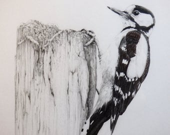 Original pencil drawing - Birds
