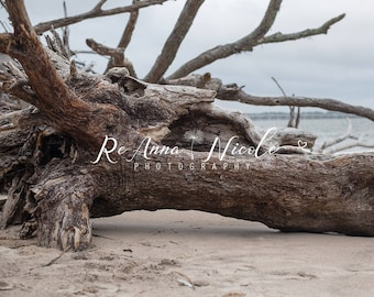 Digital Backdrop Driftwood Beach II