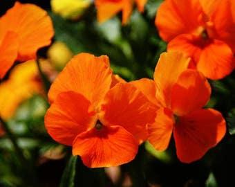 Floral Photo