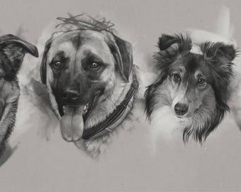 Custom Pet Portrait Sketch