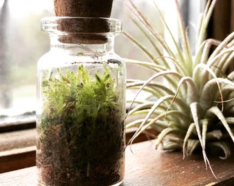 Earth in a bottle- Mini earth, live green moss terrarium